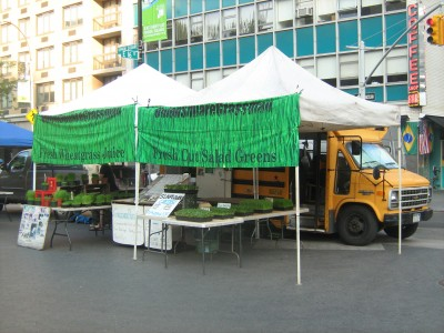"We are at the Union Square Farmers Market MWFSat, 8 am to 6 pm, all year. We have been Growing and selling Wheatgrass and Salad Greens for 19 years. Since 1994, ""Greener is Better!"""